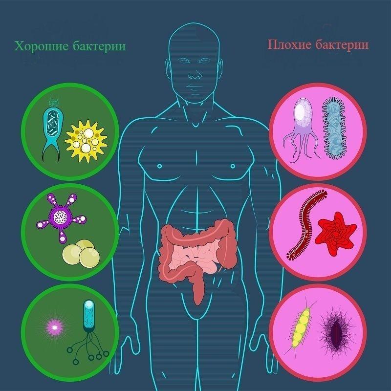 Как сбалансировать кишечную микрофлору