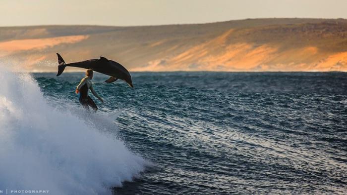 Дельфин в красивом прыжке.