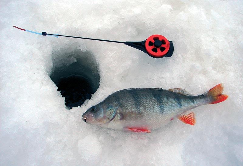 Наша рыбалка безмотылка