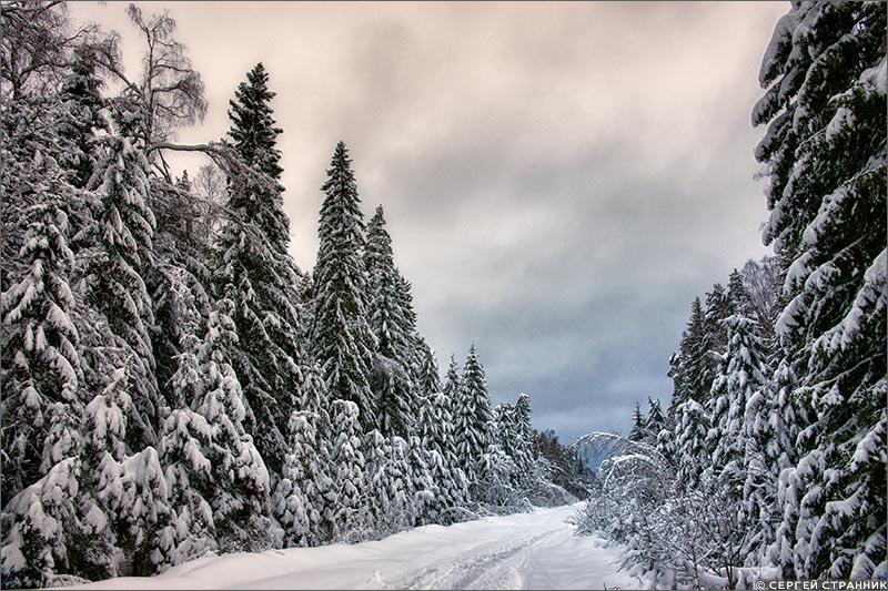 Фото Гжель Дорога в зимнем лесу