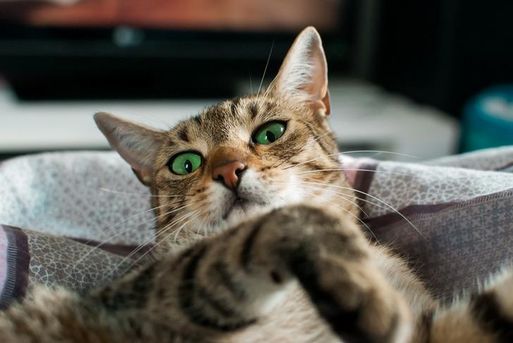 Думали, что кот умирает, но симптомы болезни показались странноватыми