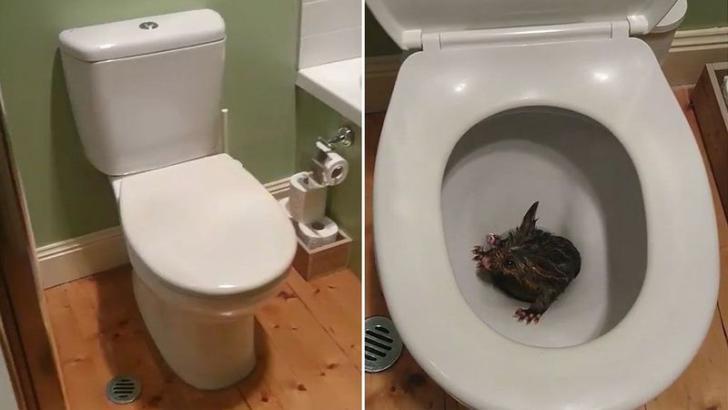 Когда в туалете что-то зашебуршилось, они и не догадывались, каким милым оно окажется