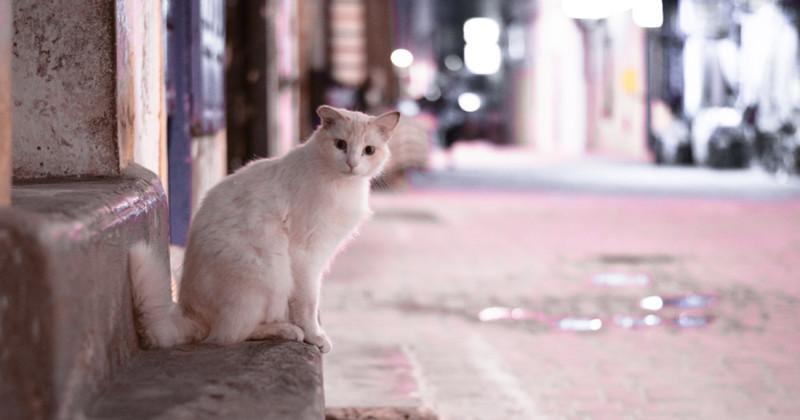 Эс-Сувейра - город котов