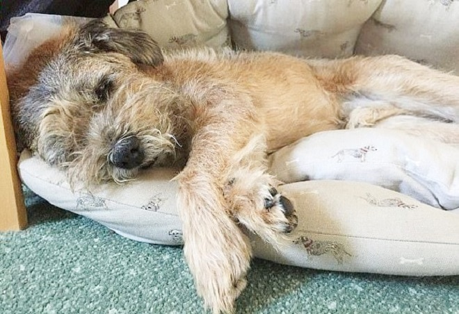 Эмоциональная встреча: хозяйка потеряла собаку, и только людская доброта сотворила чудо!