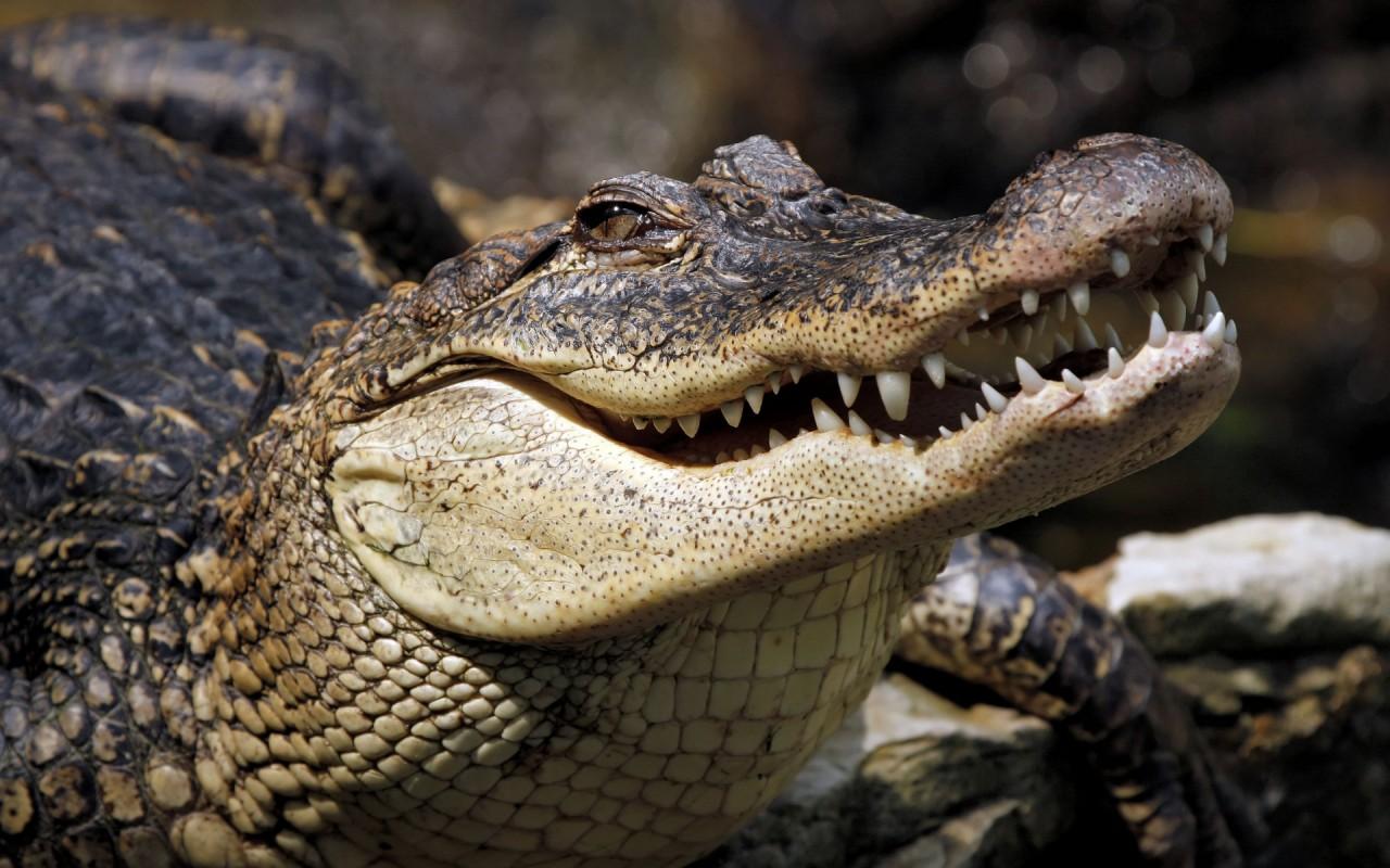Огромный крокодил надвигался на людей. Посмотрите, что сделал их маленький песик!