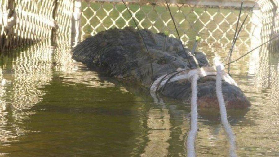 Гигантского крокодила в Авст…