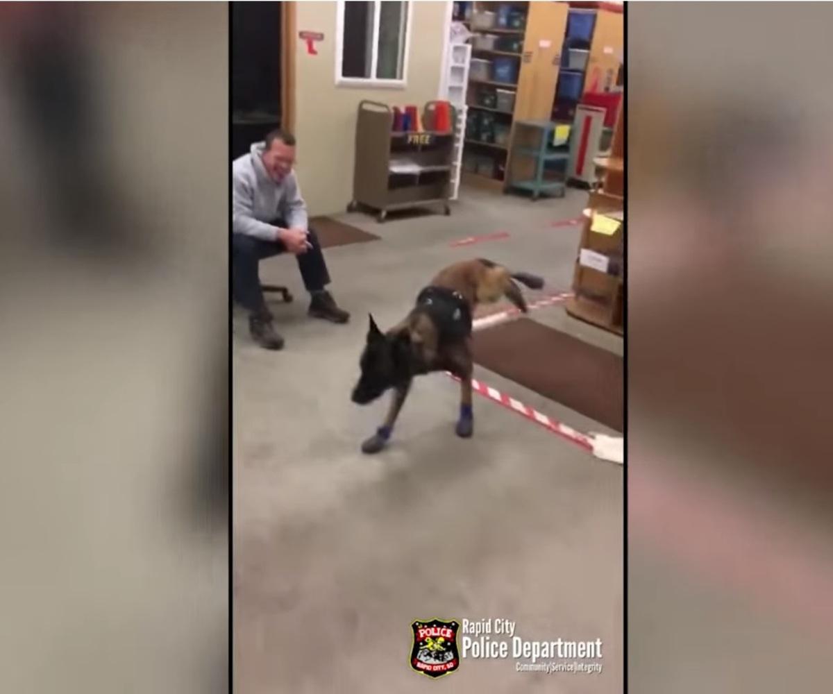 Собака в ботинках рассмешила интернет