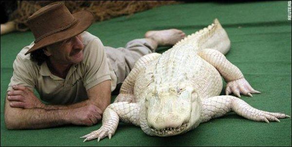 Крокодил Данди и его белая г…
