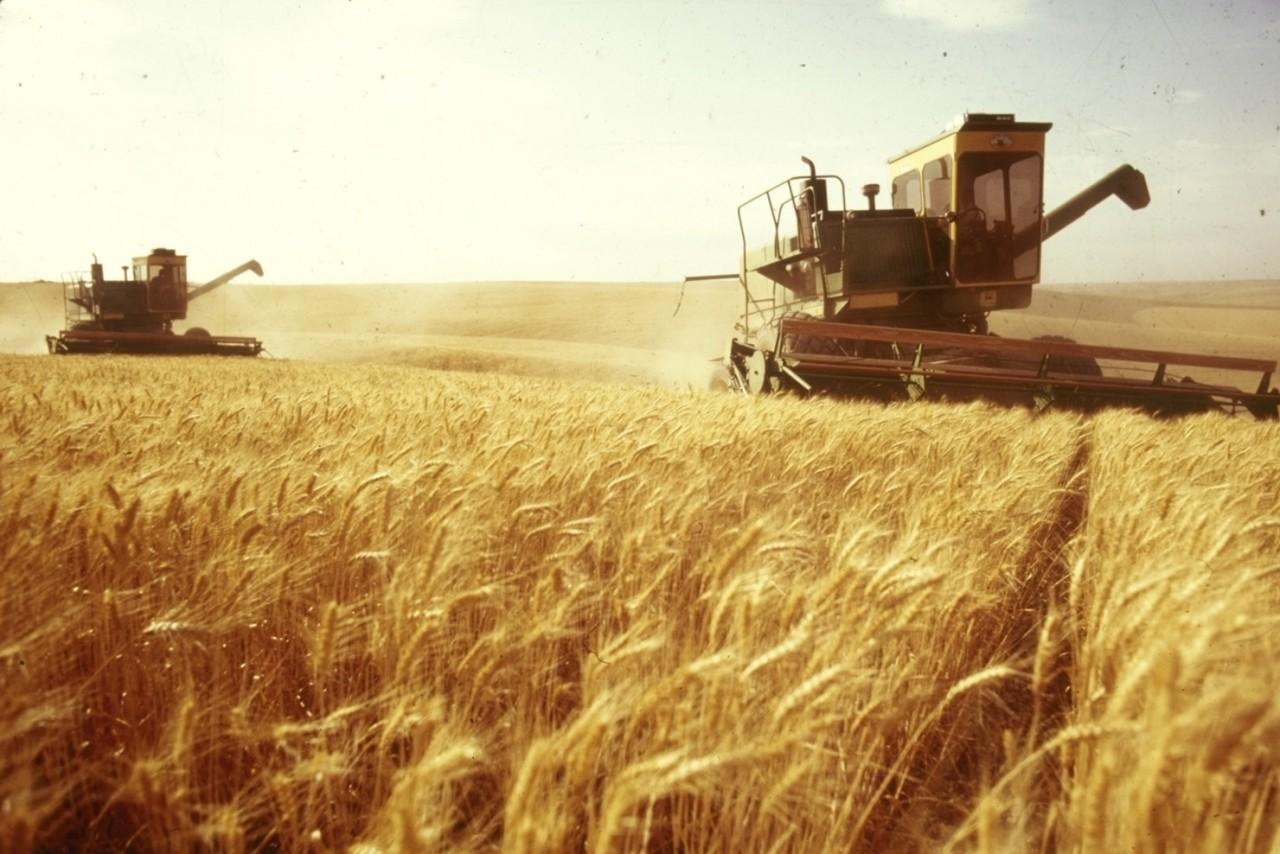 """""""Всё пожрал хомяк"""": Минсельхоз сообщил о потерях миллионов тонн зерна при уборке урожая"""