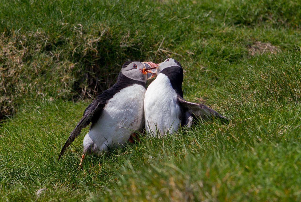 Фото достопримечательностей Стран Скандинавии: Местные птицы не боятся людей и легко подпускают их к себе