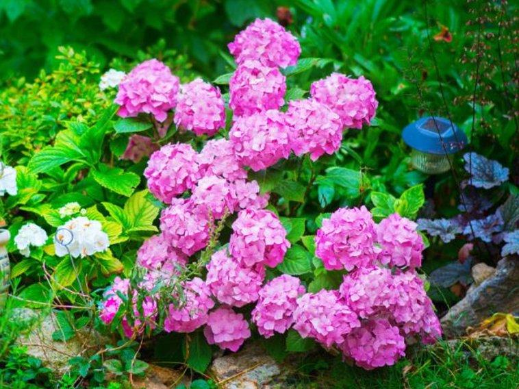 Декоративные кустарники: календарь цветения. Как защитить растения от возвратных заморозков