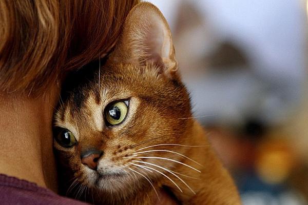 Восстановление кошек после операции