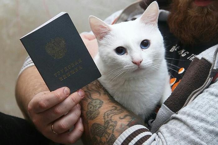 Кот из Нижнего Новгорода получил трудовую книжку и зарплату