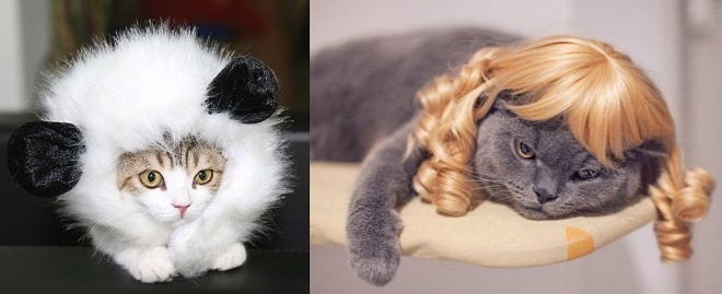 Что не стоит дарить мурлыке, или 7 подарков, которые ваш кот возненавидит