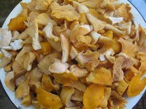 Варенье из грибов по итальянскому рецепту — «Mermelada de Setas»