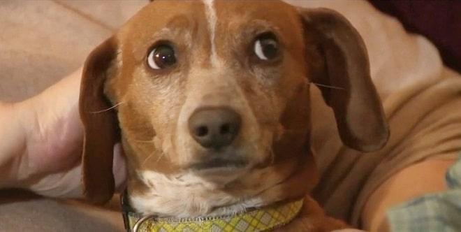 «Чтобы было веселей»: кто-то зажег фейерверк прямо на спинке собаки