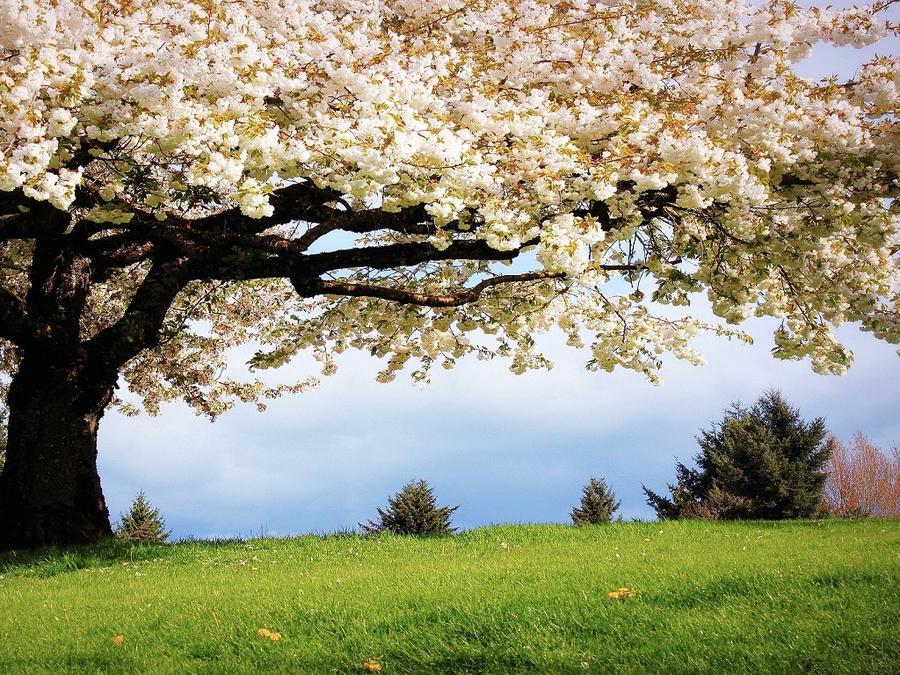 За что мне нравится весна