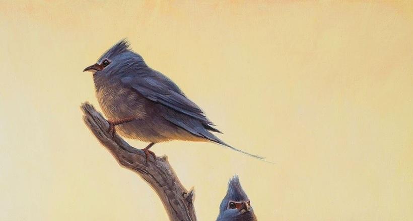 Птицы эволюционировали сразу после гибели динозавров