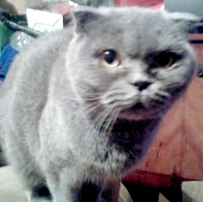 Из грустных глаз текли слезы. Хозяева принесли усыплять еще молодую и полностью здоровую кошку