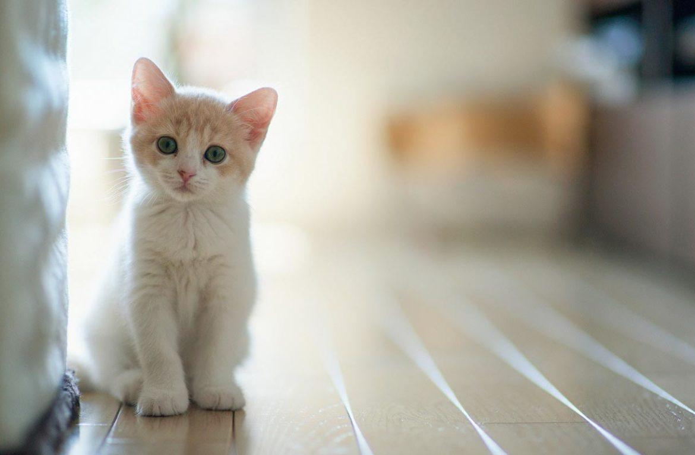 Что лечат кошки и лечат ли кошки человека на самом деле