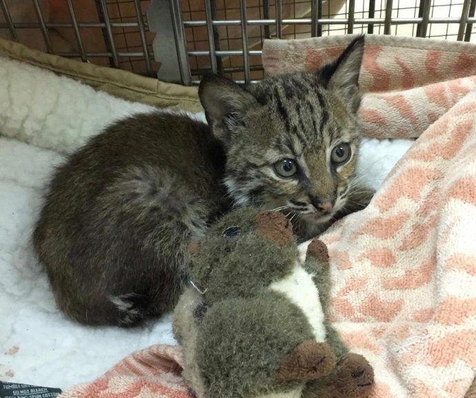 На дороге сидел полосатый котёнок. Его подобрали и обогрели, только… почему у малыша такой странный взгляд?