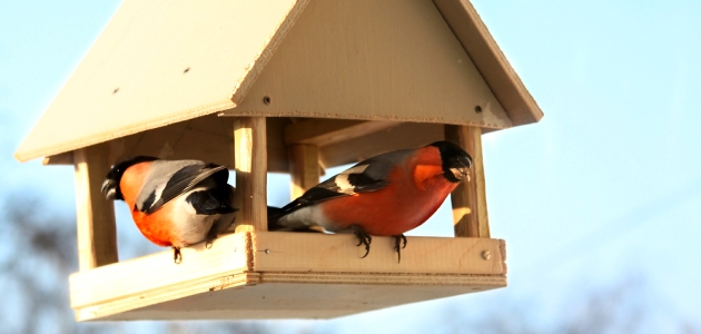 Как сделать домики для птиц: самые разные типы домиков