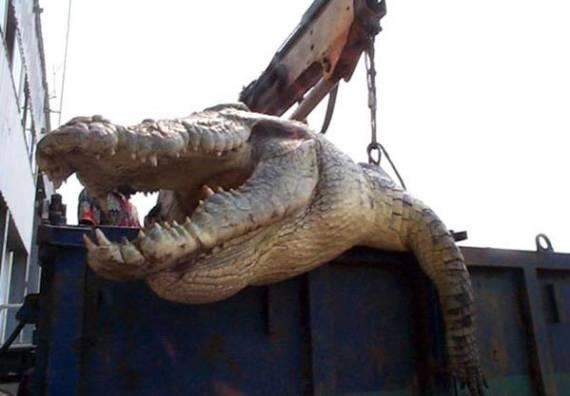 Донецк – желто-голубые слезы крокодильи