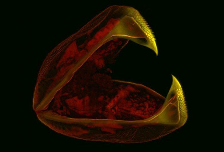 Страсти-мордасти: фото реальных существ под микроскопом, которые страшнее любого монстра из ужастиков