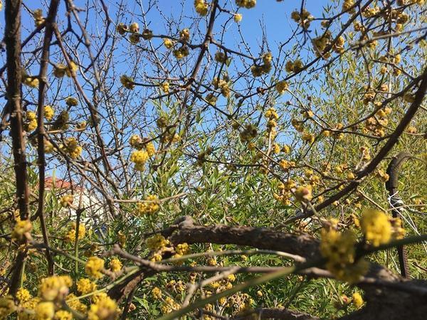 Садовые работы в марте в Крыму и Севастополе. Органическое земледелие на юге (видео)
