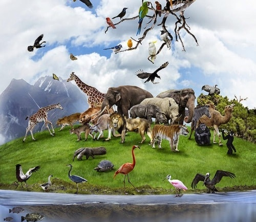 Праздник наших «братьев меньших» – День животных- 04 октября