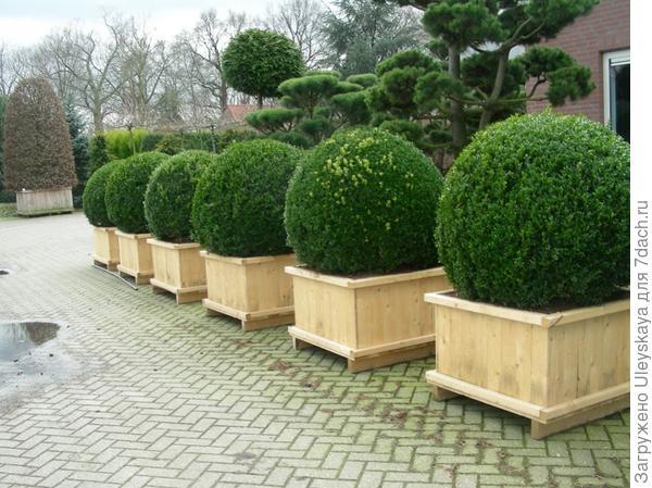 В деревянных кадках, фото сайта dachadesign.ru