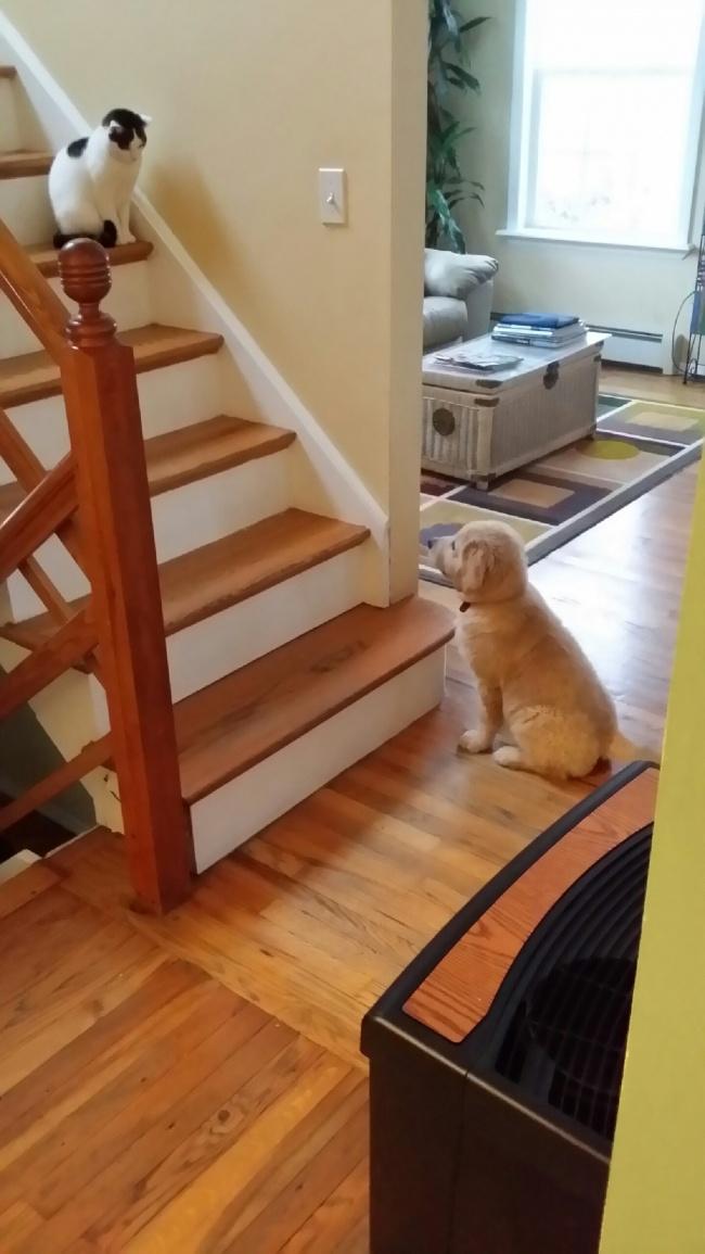 коты и собаки в одной семье