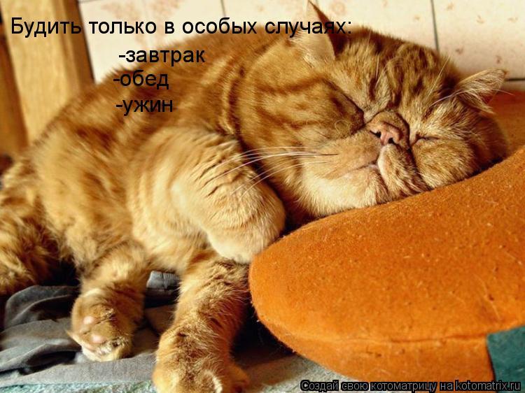 Кот – обжора