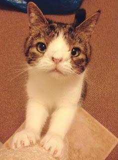 Встречайте Монти: Чудесного Кота с Необычным Лицом