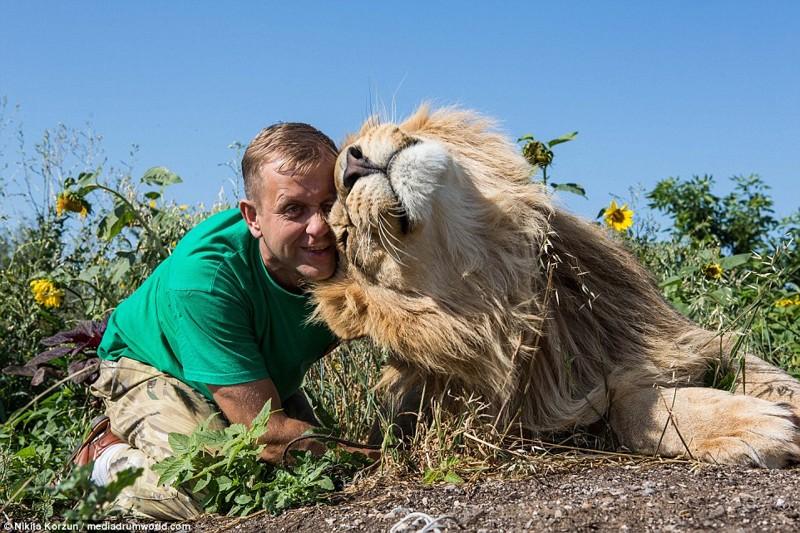 Поразительно! Эти львы похожи на ручных ласковых котят!