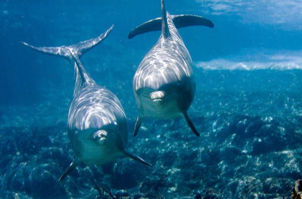 Дельфины тоже любят смотреть телевизор