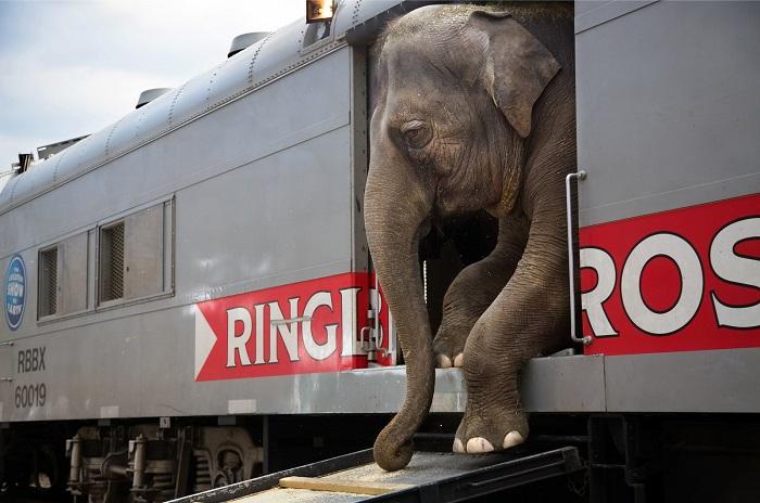 Слон, уезжающий дальше гастролировать. Фотограф: Стефани Синклер (Stephanie Sinclair), США.