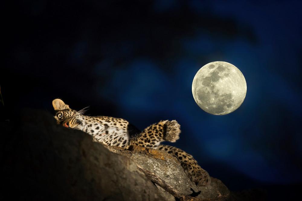 Дикая и опасная ночная Африка