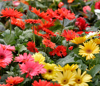 Международный фестиваль садов и цветов стартует на днях в Москве