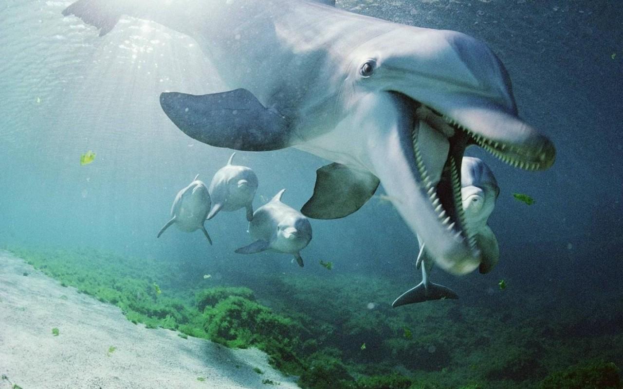 Почему акулы недолюбливают дельфинов