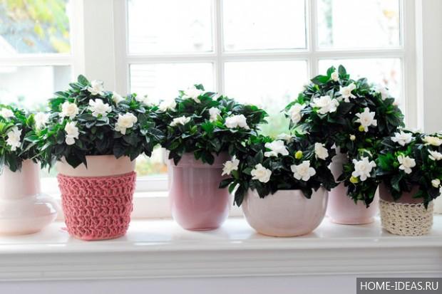 Комнатные цветы, цветущие круглый год, неприхотливые