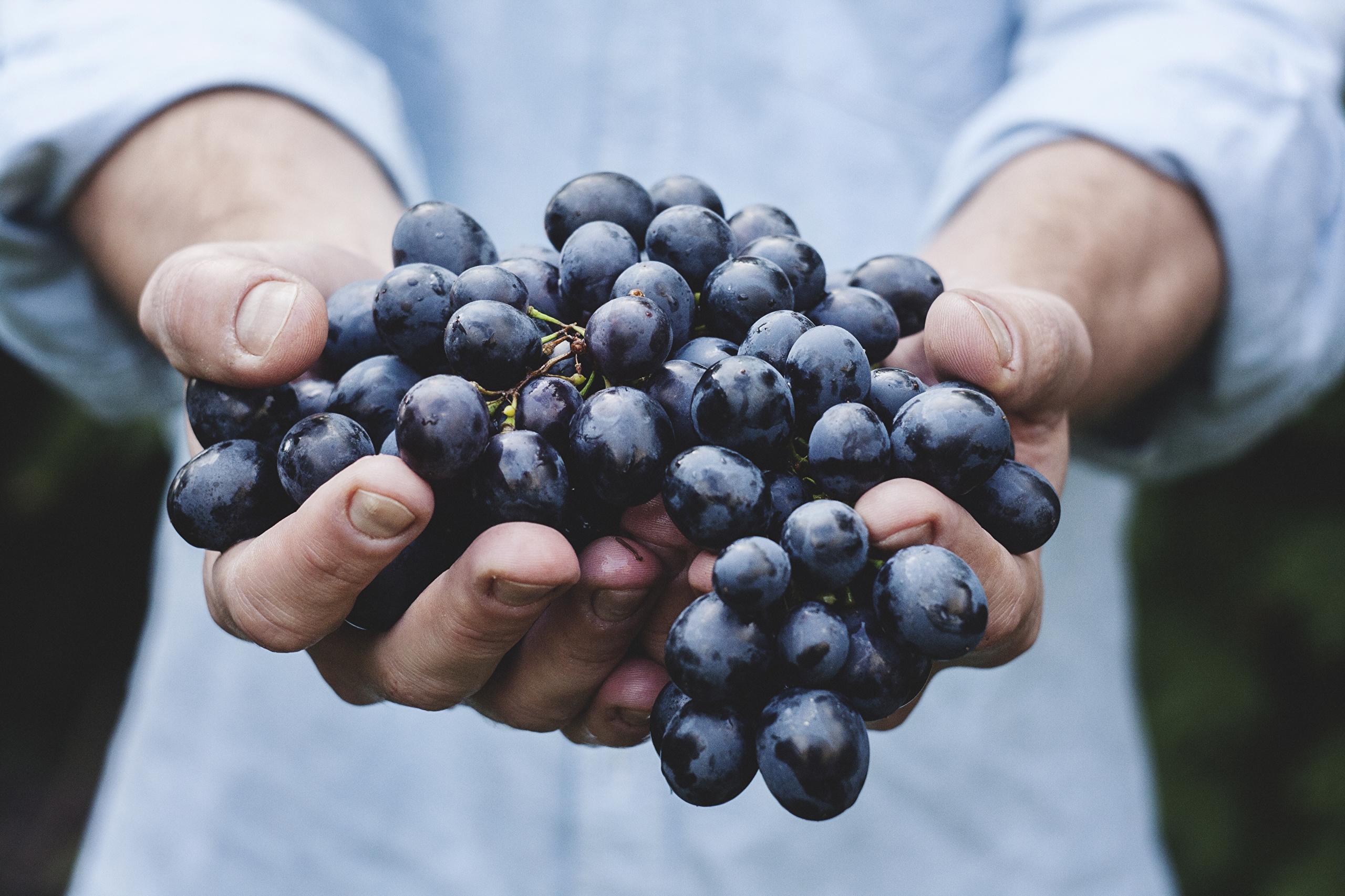 Кому лучше отказаться от винограда и вишни — омоложение может дорого обойтись