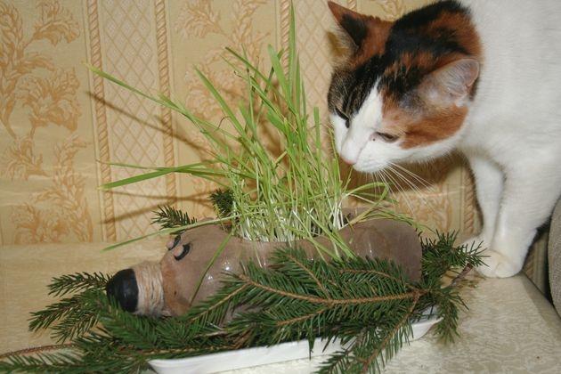 Необычный контейнер для растений