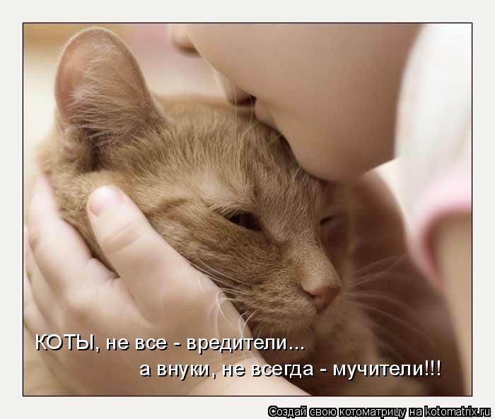 Котоматрица: КОТЫ, не все - вредители... а внуки, не всегда - мучители!!!