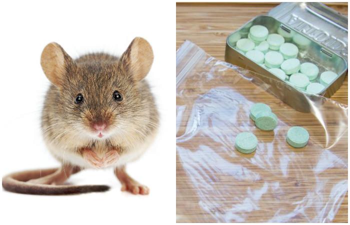 Как эффективно избавиться от мышей в доме с помощью…свежего дыхания