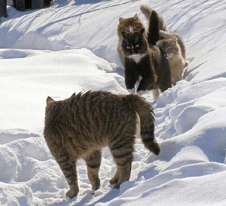 Разборки по-кошачьи во всей …