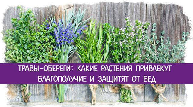 Травы-обереги: какие растения привлекут благополучие и защитят от бед