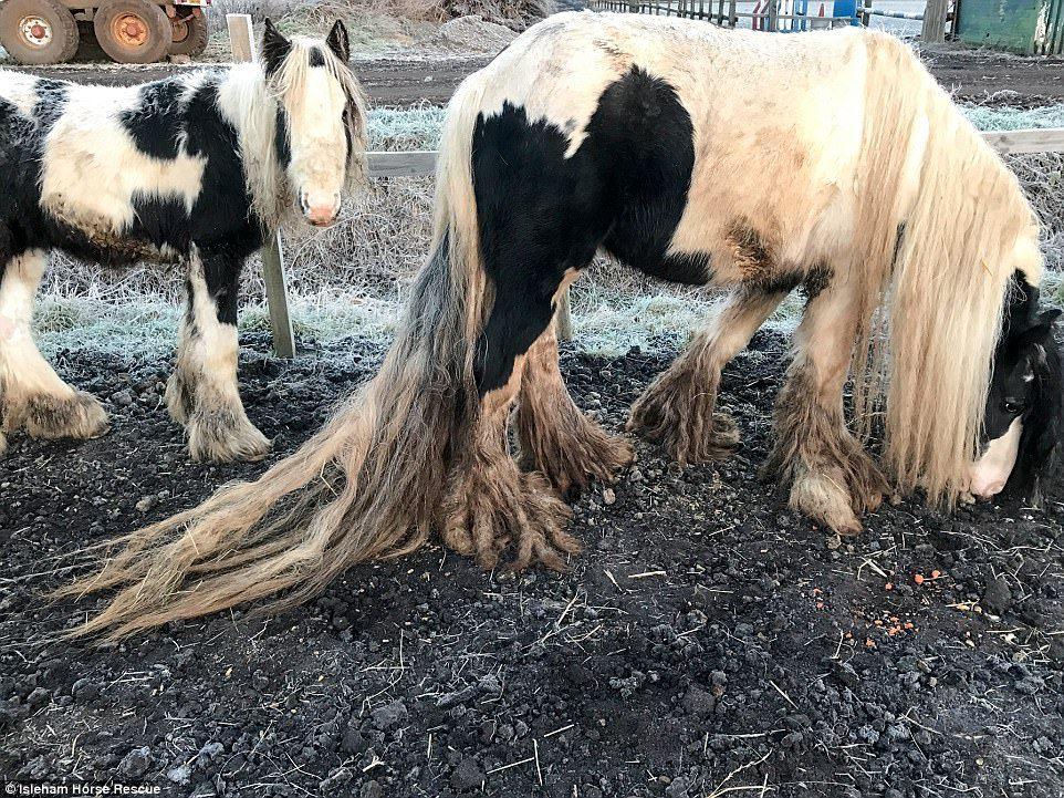 Брошенки. Спасение брошенных людьми лошадей