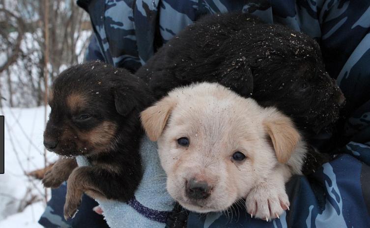 Более 20 брошенных щенков нашли в лесу под Рязанью
