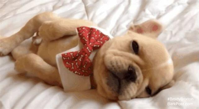 Собаки, которые устроились в кровати хозяина